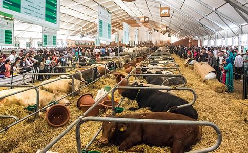 摩洛哥梅克內斯農業展覽會SIAM