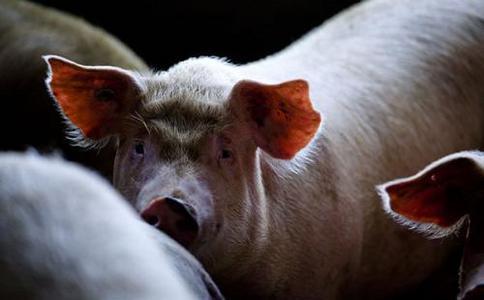 美国爱荷华洲猪类畜牧展览会World Pork