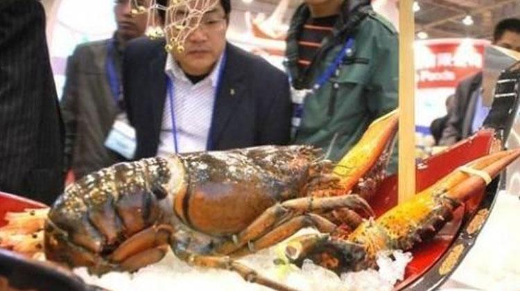 品各地海鲜,观渔业风貌 | 2019广州渔博会即将到来!