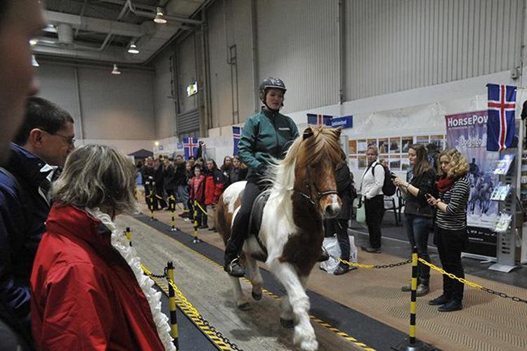 德国汉诺威马术及狩猎展览会参展效果好不好?